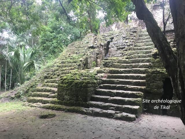 Tikal 6